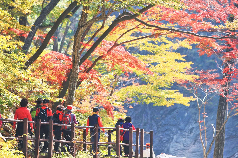 Korea Fall Season Day Tour – MT. Naejangsan – HaB Korea.net