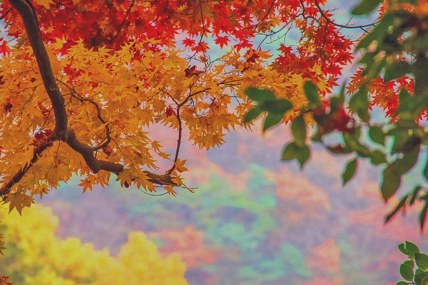 The Season Of Fall: MT. Odaesan: K-Drama Dokkaebi