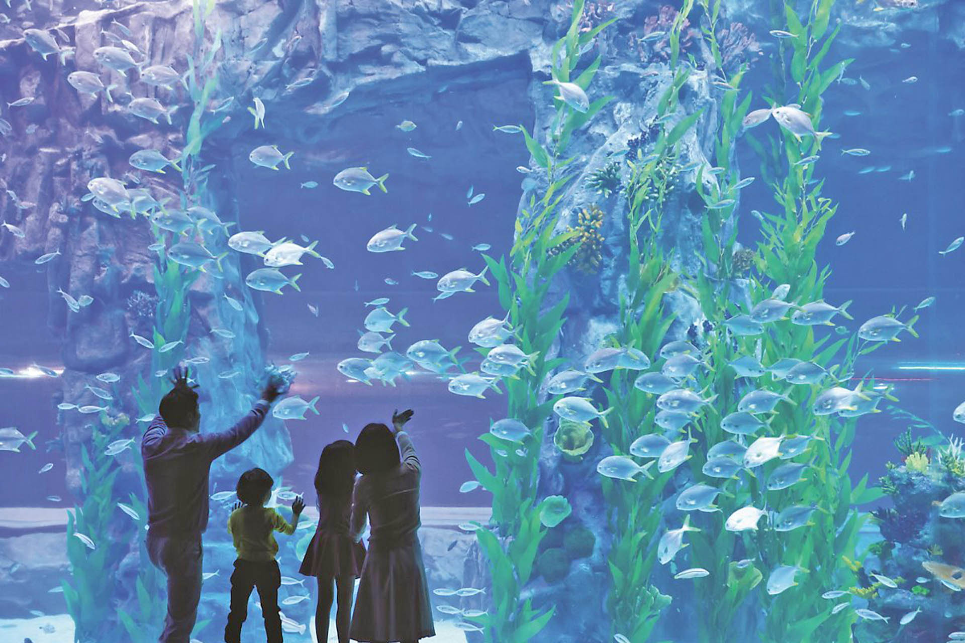 Lotte World Adventure Aquarium Day Pass Discount Tickets